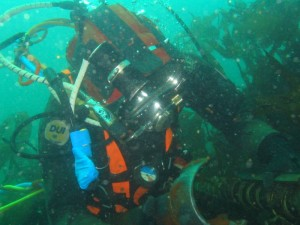 Diver inspecting EMEC cables (Image EMEC)
