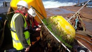 ICIT conducting biofouling studies on EMEC waverider buoy (Credit ICIT)